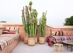 Cactus on Majlis patio Outdoor Rooms, Outdoor Gardens, Outdoor Living, Outdoor Decor, Outdoor Seating, Home Interior, Interior And Exterior, Interior Modern, Kitchen Interior