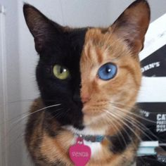 Internet Skepticism Toward Unaltered Photo  Lands Unique Cat an Appearance on The Today Show ... #pets #animals ... PetsLady.com