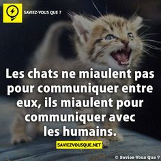 Did you know that? Funny Facts, Funny Quotes, Good To Know, Did You Know, Quote Citation, Cat Life, I Love Cats, Picture Quotes, Knowing You