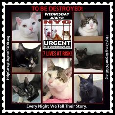 TO BE DESTROYED 04/04/18 - - Info  Tonight's list has been posted. -  Click for info & Current Status: http://nyccats.urgentpodr.org/to-be-destroyed-cats/