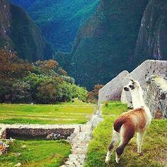machu picchu + llamas = the best place on earth