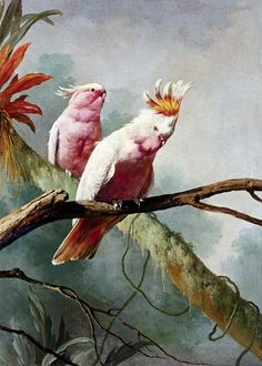 """Major Mitchell's Cockatoos"" -by, Jacques Barraband (1767-1809)"