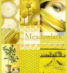 Модный цвет Pantone 2018 - Meadowlark. Коллаж от Зои Ти