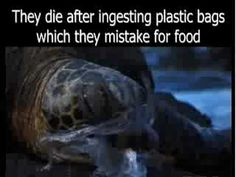 """Plastic Bags...""""The Harsh Facts"""""""
