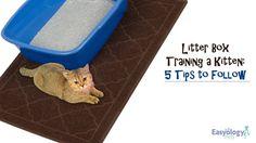 Litter Box Training a Kitten: 5 Tips to Follow! @easyologypets