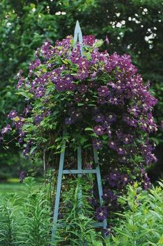 Garden Obelisk with clematis.  Very necessary for large beds for vertical interest.
