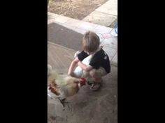 Did this chicken forgot to chicken, or is this where we're really at in 2014? I, for one, will welcome our new chicken overlords. | Small Boy Offers Hug, Clucking Chicken Accepts