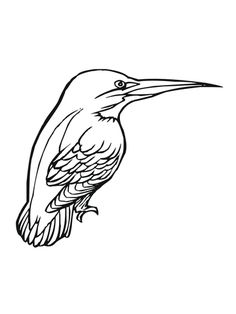 An Interesting And Cute Birds Coloring Pages