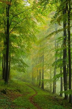 forest-sprite:  imagine this place at dawn
