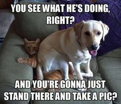 Funny Animals Boards » Just Hilarious