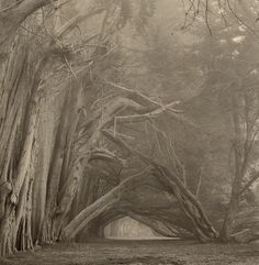 Paul Kozal (Am. ), Gateway, Sepia toned gelatin silver...