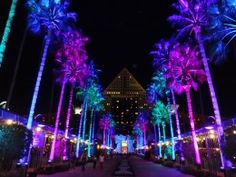 The Lit Causeway at Disney's Swan & Dolphin Hotels for Christmas!  Spectacular changing colors!