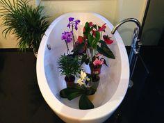 Do you like my bathtub?