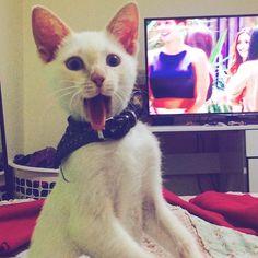 Mantecado mira a la cámara !   #rudo #fotogénico #mantecado #esdegatos #locuras #gato #gatos #gatito #miau #ñau #elmastudo #dark #instacat #instafoto #instagato #instagram #instasize #rockero by emirandam