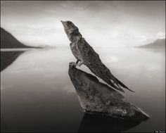 Approaching the shoreline of Lake Natron in Tanzania, photographer Nick Brandt faced at eerie sight: There, lying on the earth as still and stiff as statues, were calcified corpses of a variety of birds and bats that had met their untimely demise after crashing into the deadly waters.