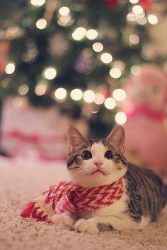 クリスマスの猫画像 04|ねこLatte+