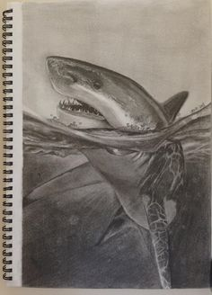 Great White Shark Faber-Castell drawing pencils. #shark #greatwhiteshark…