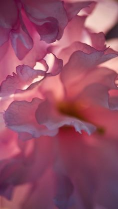Beautiful - this is my kind of flower photography. I'd love a print of this about 5 feet tall.