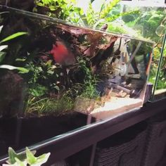 Fish Aquarium Decorations, Aquarium Setup, Nano Aquarium, Aquarium Design, Turtle Aquarium, Aquarium Garden, Aquarium Landscape, Betta Fish Bowl, Fish Gallery