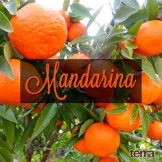 El árbol de la mandarina crece facilmente en nuestra región entre los 600 y 1800 m.s.n.m y alcanza una altura de 5m ¡Te invitamos a sembrarlo y a disfrutar de esta deliciosa y jugosa fruta!