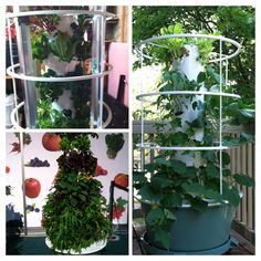 Eating more fruits and vegetables is the best way to get the nutrition you need to be healthy.By providing vine ripened produce right outside your back door, a Tower Garden makes it convenient to eat more fresh, healthy food. There's no weeding, tilling, or getting dirty. Each garden, holds 20 plants, and use as little as 10% of the water and land commonly used in conventional gardening. And can grow year-round inside and out! Message to learn more or visit my page…