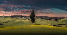 mellow yellow - this is taken on my recent trip to Italy at the lovely of the toscana area...