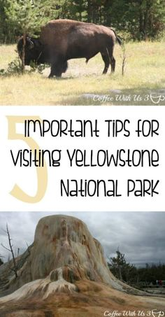 5 Important Tips for Visiting Yellowstone-- Make sure you know these important tips for traveling to Yellowstone National Park, so you stay safe and enjoy your trip!