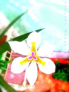 My flower. This flower, although simple It has a very important meaning for me !!! ....................... Esta flor, embora simples Ela tem um significado muito importante para mim !!!