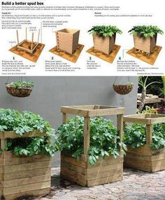 How to Build a Potato Box for Almost Free – Growing Potatoes - Growing Plants at Home Veg Garden, Edible Garden, Balcony Garden, Garden Boxes, Container Gardening, Gardening Tips, Flower Gardening, Indoor Gardening, Organic Gardening