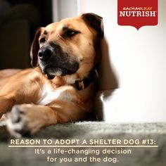 LIVES BLOSSOM : Not that we need a reason do we?!!  ;  )   A wonderful advertising concept, especially from a dog food company!