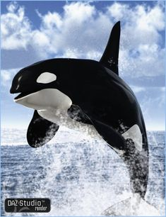 This accurate new model brings a whole pod of orcas to your runtime. Description from daz3d.com. I searched for this on bing.com/images