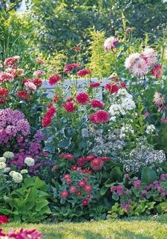 Create a massif for 3 times nothing with perennials Dry Garden, Autumn Garden, Vegetable Garden, Shade Flowers, Flower Landscape, Moon Garden, Real Plants, Garden Borders, Flower Beds