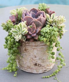 Rustic Succulent Arrangement in Natural Birch Bark Planter