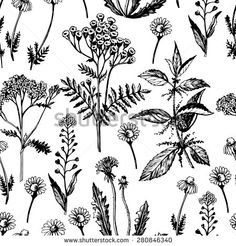 stock-vector-graphic-seamless-with-medicinal-herbs-hand-drawing-seamless-for-fabric-design-gift-wrapping-280846340.jpg 450×470 pixels