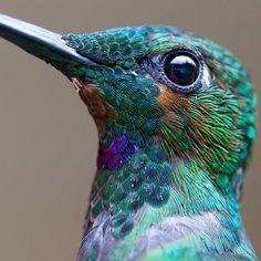 20 fotografías de colibries que revelan su increíble belleza