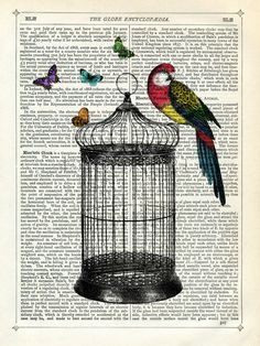 Bird Cage and Parrot, Marion McConaghie Prints from Easyart.com. Gift for your quirky friend