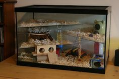 Hamster Home! I've always had an issue with shelves to close to the top.my hammy chews! Hamster Tank, Diy Hamster Toys, Hamster Diy Cage, Hamster Life, Hamster Habitat, Baby Hamster, Hamster Treats, Hamster House, Hamster Stuff