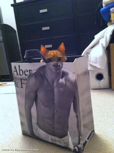 The Ellen DeGeneres Show's photo: Who doesn't love a fluffy kitty with washboard abs? #CatWeek