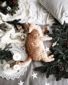 christmas mood aesthetic inspiration coziness ideas