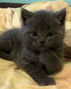 Black Beauty - 12th October 2015 - We Love Cats and Kittens