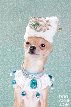 High Fashion Portraits of Chihuahuas (12 Pics) | Pleated-Jeans.com