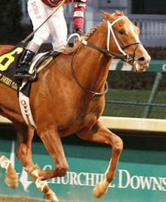 Tapiture-still my favorite and slated to run next week in the Arkansas Derby.