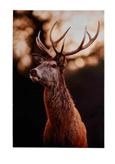 DEER canvas bilde Animals, Pictures, Animales, Animaux, Animal, Animais