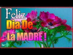 Feliz Dia De La Madre - Frases Hermosas Para Dedicar Por El Dia De La Madre – Feliz Dia Mamä - YouTube
