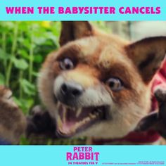 NOT COOL. #PeterRabbitMovie in theaters February 9th.