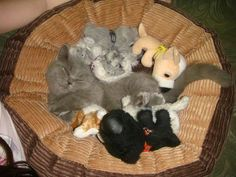 TOP 40 Funny Cats Pictures | Funny Cat | DomPict.com