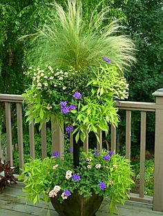 "Stem Basket tiered planter - ""Basket Column contains coral and purple verbena, lacy sweet potato vines (ipomoea), pale yellow million bells (petunias), and a centerpiece of annual grass. Container Plants, Container Gardening, Plant Containers, Container Flowers, Outdoor Plants, Outdoor Gardens, Potted Plants, Porch Plants, Potato Vines"