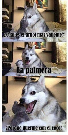 Recopilacion De Memes Del Perro Husky Humor En Taringa Funny Dog Jokes Dog Jokes Bad Pun Dog