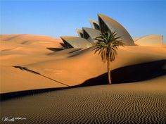The Great Oasis of the Libyan Desert. The African continent hosts the largest hot desert on earth Oasis, Deserts Of The World, Cap Vert, Fun Deserts, Amazing Deserts, Bel Air, Belle Photo, Palm Trees, Beautiful Places