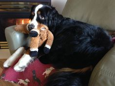 Horsey relaxing with me by the fire.